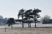 stock photo of dog-walker  - Dog Walker in Trees on Stinchcombe Hill with light Snow - JPG