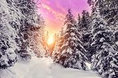 Fantastic Winter Mountain Landscape. Overcast Colorful Clouds, Glowing In Sunlight. Alp Trees, Of Sn poster