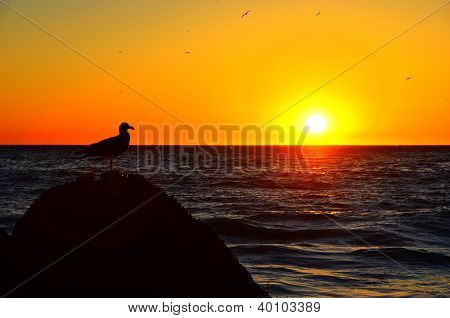 Sunset At Malibu Beach With Seagull Standing On A Rock
