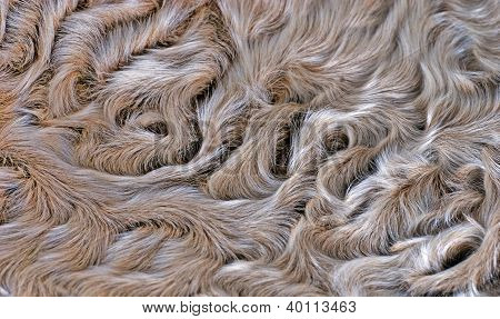 Lamb Fur Background