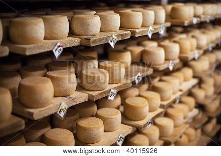 Milk cheese on a shelves