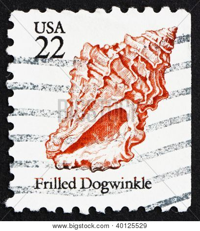 Postage Stamp Usa 1985 Frilled Dogwinkle, Seashell