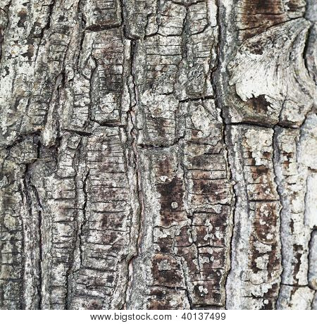 Texture Shot Of Brown Tree Bark, Filling The Frame