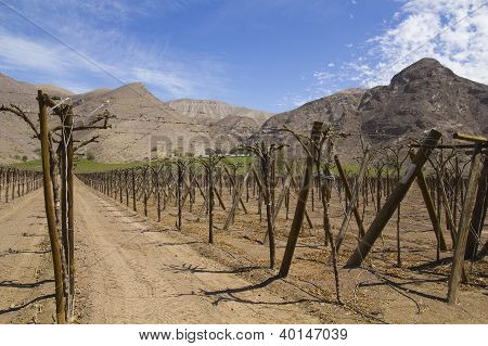 Fertile Valley In Inhospitable Mountains, Chile