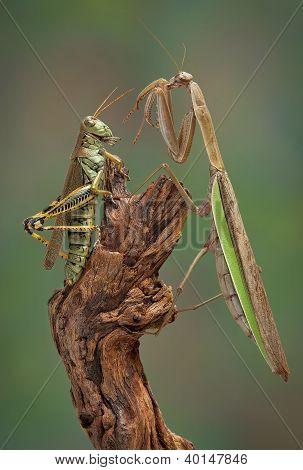 Mantis And Hopper Surprise