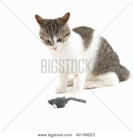 Cat Watching A Toy Mouse In Anticipation