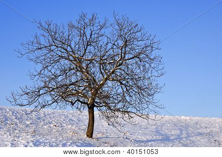 Winter Scenery With Lonely Naked Tree On A Sunny Day