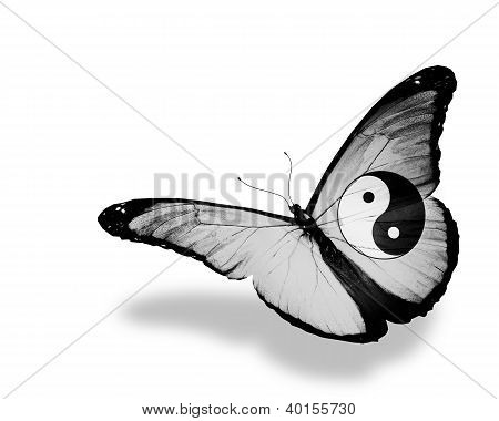 Dao Flag Butterfly Flying, Isolated On White Background