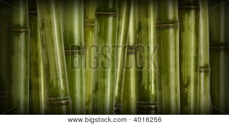 Wide Hard Bamboo Background