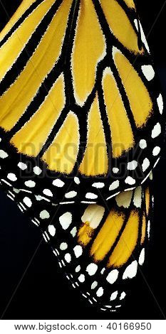 Monarch's Wing