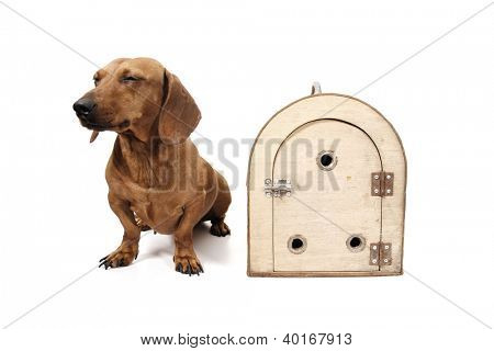 Front view of a cage and dog.