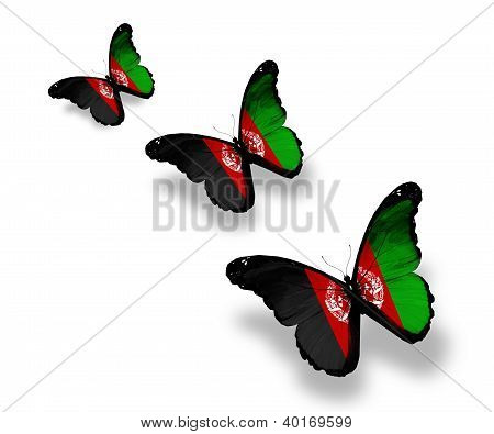 Three Afghani Flag Butterflies, Isolated On White