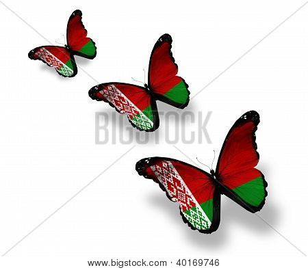 Three Belarussian Flag Butterflies, Isolated On White