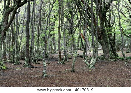Green forest at Ushuaia, Argentina
