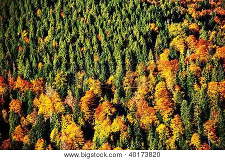 Abstract autum forest pattern