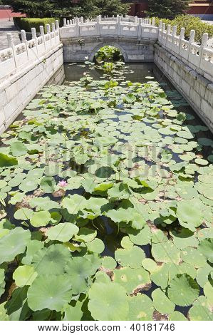 Bridge over river with water lilies