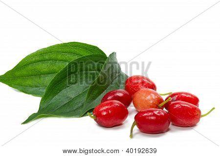 Cornelian Cherry (Cornus mas) isolated on white background