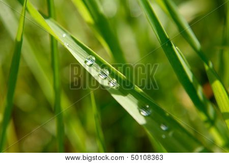 Green Leaf With Rain Droplets