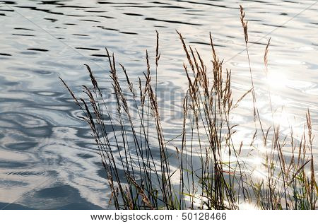 Nature Background With Coastal Reed And Shining Lake Water