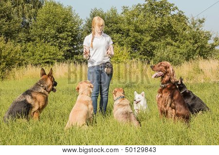 Dog Trainer Teaching Dogs