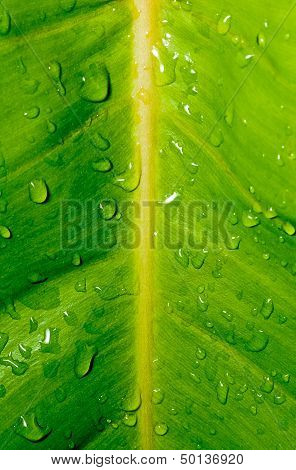 Drops, Droplets Of Water On Green Leaf, Fresh, Natural, Close Up