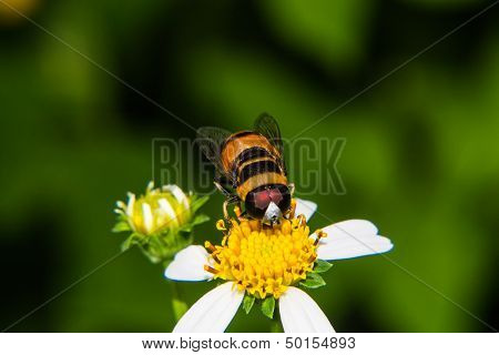 Macro Of Bee On Flower