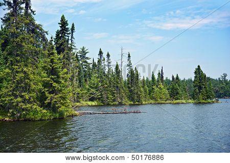 Wild Northern Minnesota
