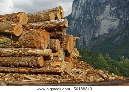Wood Logs Stock Pile