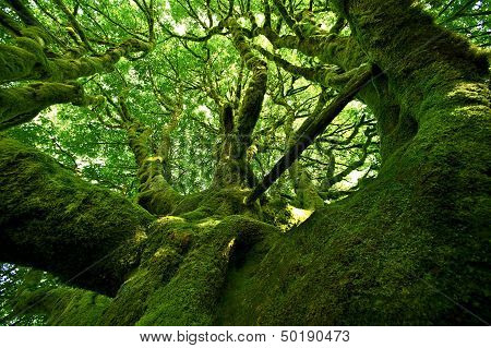 Old Mossy Tree