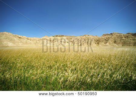 Badlands Meadow