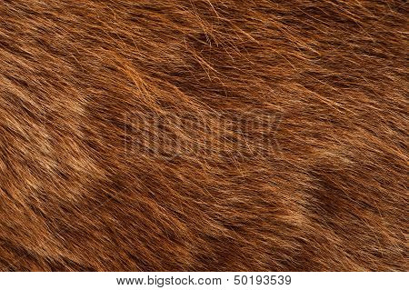 Brown Bear Coat