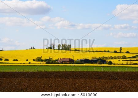 Houses And Barns In A Yellow Flowers Field
