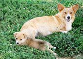 Постер, плакат: Мэгги и щенка