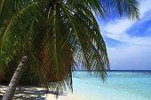 picture of dhoni  - Tropical beach on Maldives in the Indian Ocean - JPG