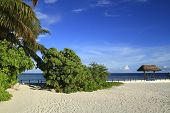 stock photo of dhoni  - Tropical beach on Maldives in the Indian Ocean - JPG
