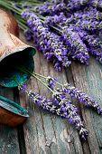 stock photo of lavender plant  - Fresh lavender over wooden background - JPG