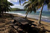 pic of west indies  - Beach of Tartane - JPG