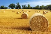 stock photo of farm land  - Hay bail harvesting in golden field landscape - JPG