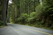 stock photo of redwood forest  - Road in Redwood Forest in Northern California U - JPG