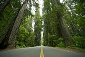 stock photo of redwood forest  - Redwood State Park - JPG