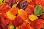 foto of ashes  - Autumn background - JPG