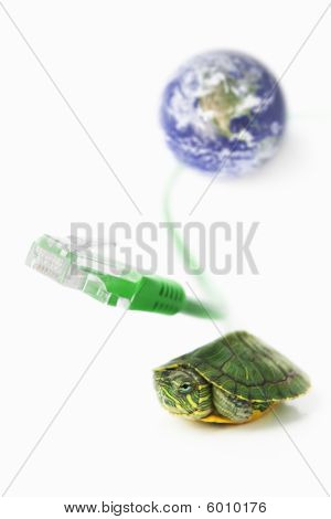 Turtle, Lan Cable And World Globe