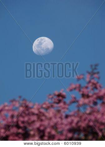 Jacaranda Moon