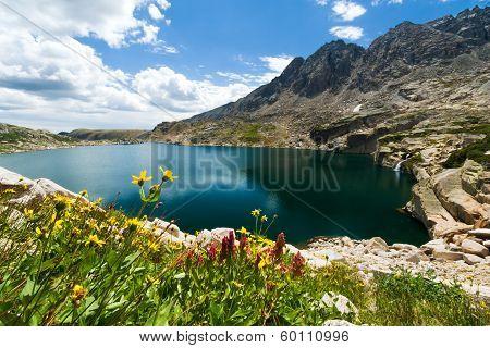Mountain Wild Flowers Landscape Colorado