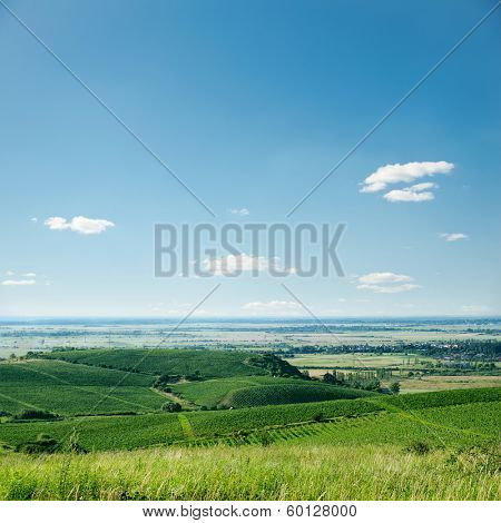 view to vineyard and blue sky