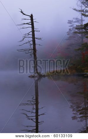 Tree Lake Fog And Autumn Colors