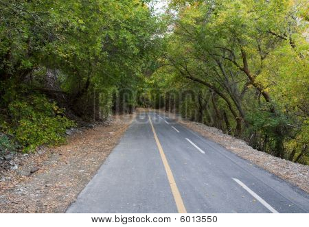 Trail Through Trees In Provo Canyon