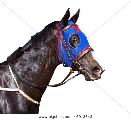 Sweaty Racehorse With Flared Nostrils