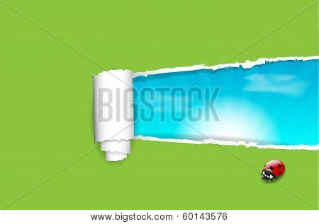 Ripped paper background, blue sky, ladybug