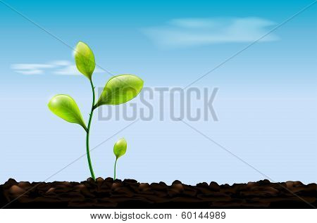Green sprout, soil and blue sky with clouds
